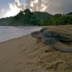 Trinidad Island